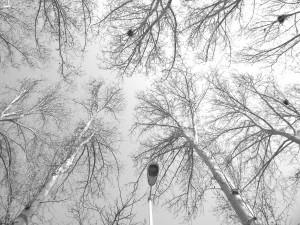 © Nosrat Panahi Nejad Tehran 2016