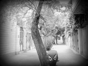 "Copyright © Nosrat Panahi Nejad "" Iran 2007"""